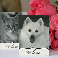 The Gift of Love - Wedding Favors, Gift Cards & Bridal Registry that Saves Dogs and Cats